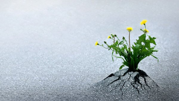 wild flower breaking through road surface