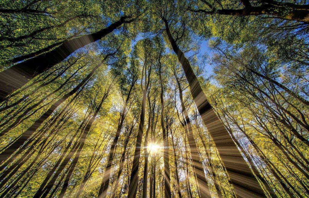 spiritual awakening - sunlight pouring through tall green trees